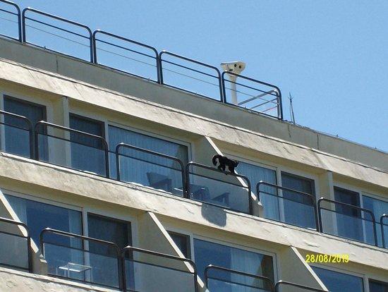 Sheraton Iguazu Resort & Spa: Monos en los balcones
