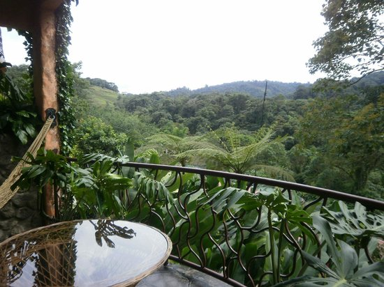 Peace Lodge: View from our deck - so lush