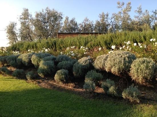 La Casa Medioevale : Very nice garden.