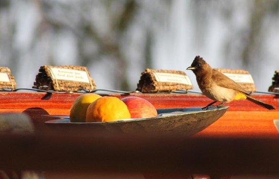 Baia Sonambula Guest House : breakfast guest