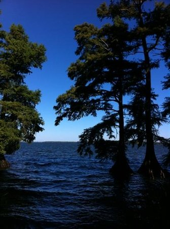 Reelfoot Lake State Park: Reelfoot lake