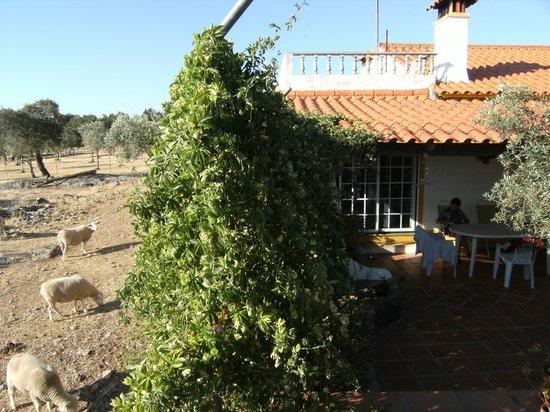 Quinta Paraiso: onze hoekkamer en de buren