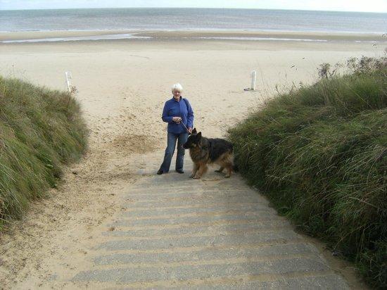 Seagulls  Bridlington: dog friendly beach walk
