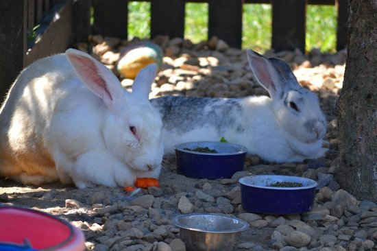 White Oak Lavender Farm : Bunnies