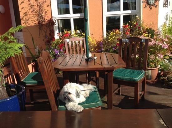 Ballyvaughan Lodge: Coco enjoying the sunshine