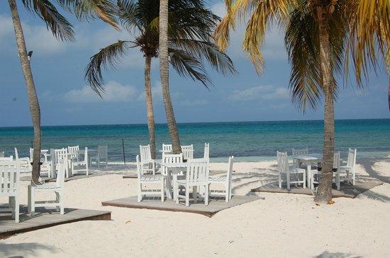 Pure ocean beachside dining picture of divi aruba for Aruba divi phoenix