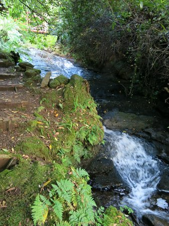 Tiroran House Hotel : Creek running through the grounds