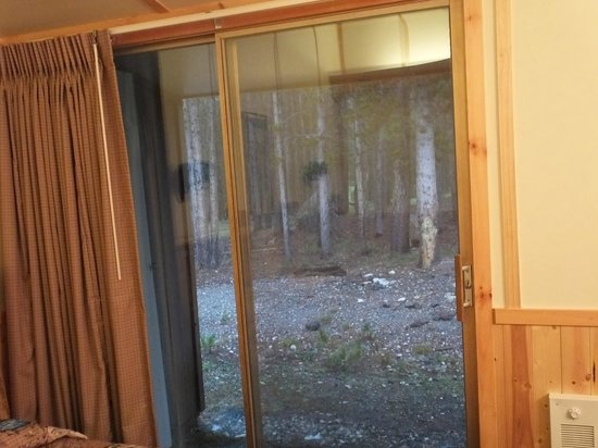 Canyon Lodge and Cabins : A nice wooded area out the backdoor.
