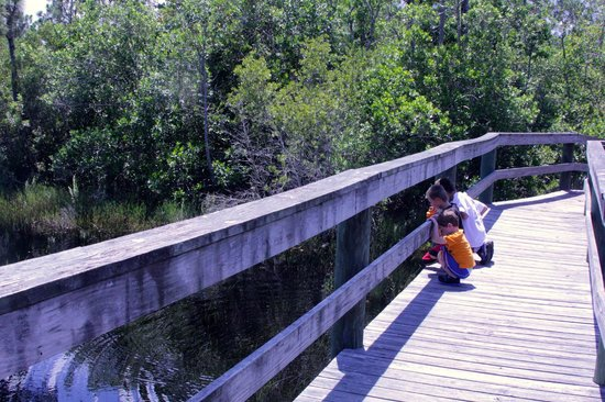 Spruce Bluff Preserve: Bridge on the South AIS Trail