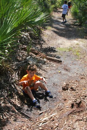 Spruce Bluff Preserve: Oops! Someone fell in the mud :-) (South AIS Trail)