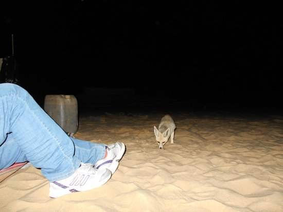 Can i trust you? Fennec Fox White Desert Egypt
