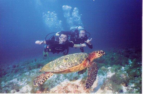 Abrolhos Marine National Park: Apreciando o fundo