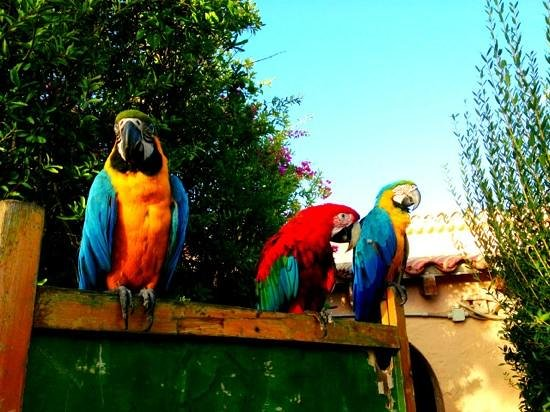 Forte Village Resort - Le Dune : the parrots