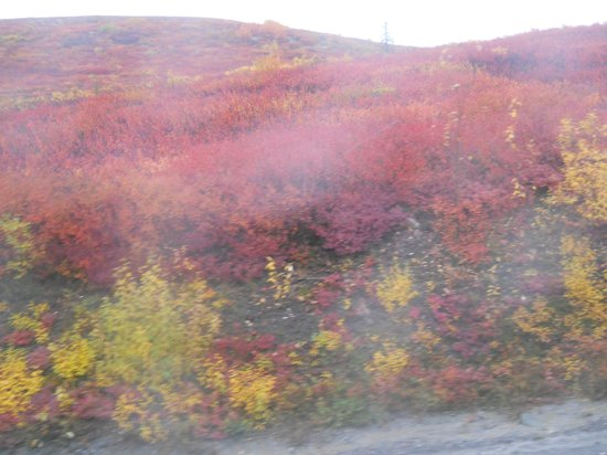 Denali National Park Bus Tours-Day Tours