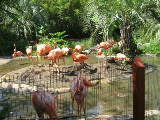 Flamingos Picture Of Riverbanks Zoo And Botanical Garden Columbia Tripadvisor