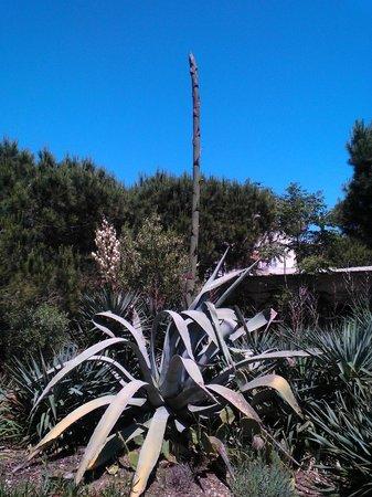 Résidence Hôtelière La Pinède Bleue : fleur de cactus