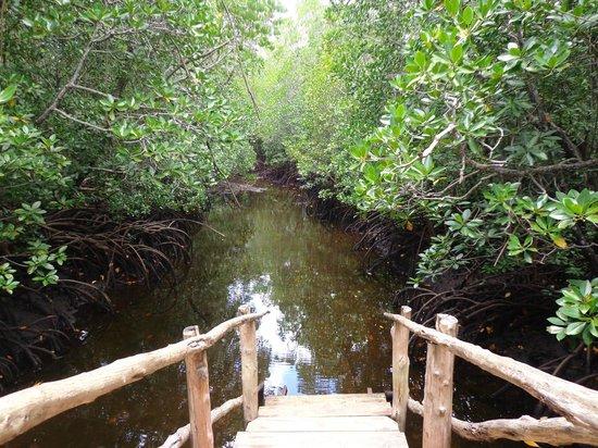 Dhow Inn : Jozani forest tour