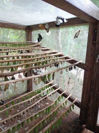 Dhow Inn: Butterfly conservation