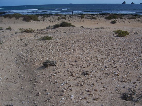 Islas Graciosa : Playa con muchas conchas