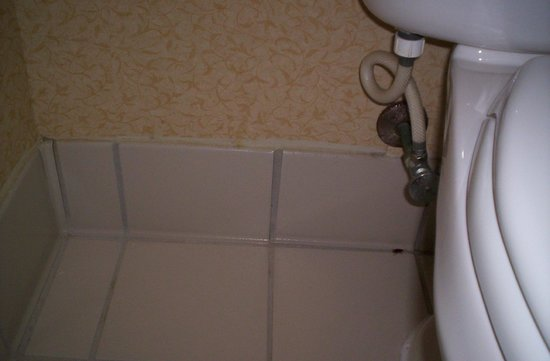 Fairfield Inn & Suites Macon: Another roach, dirty bathroom! GROSS