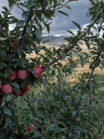 Chelan House Bed and Breakfast: Chelan, Washington is apple country!
