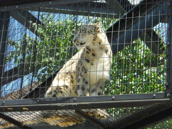 アザラシ - Picture of Asahiyama Zoo, Asahikawa - TripAdvisor