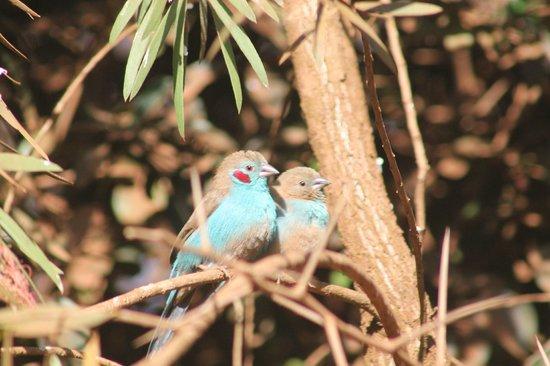 Usambara Mountains: Cordon Bleu
