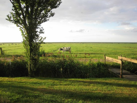 H2O Hostel Terschelling: View from my room. Moo!