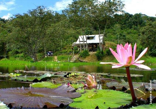Puerto osito ucumari picture of villa rica pasco region for Villas de jardin seychelles tripadvisor
