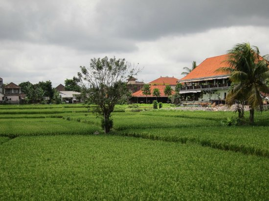 Tegal Sari : View from Reception