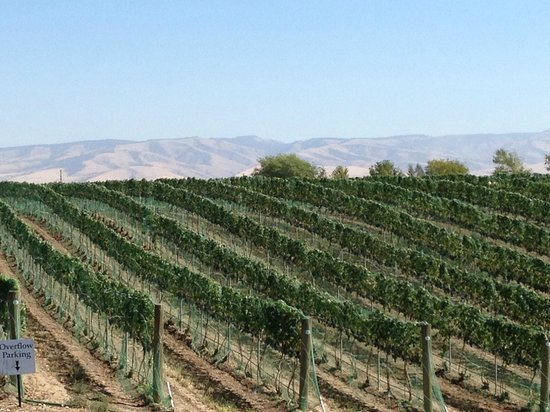 Inn at Blackberry Creek : Famous Walla Walla vineyards