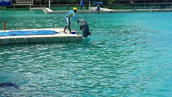 Dolphin Cove: dolphin eating