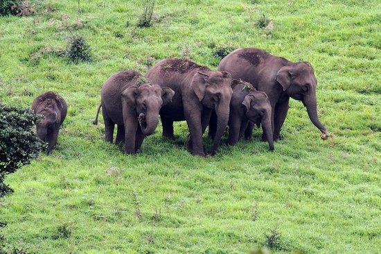 Kabbe Holidays: The elephants we spotted