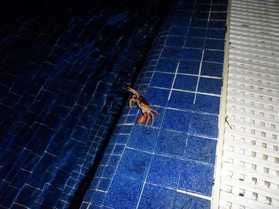 Barcelo Maya Palace: Un pequeño amiguito de noche en la piscina
