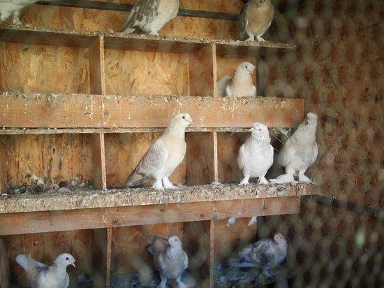 Hotel Kalehan: Pretty doves (pigeons?) in the garden