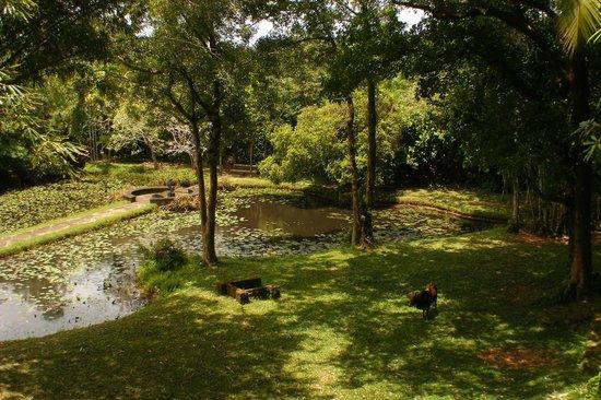 بينتوتا, سريلانكا: Beautiful parkland walks