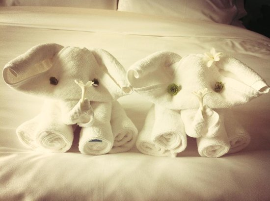 Wave Hotel: Adorable elephants