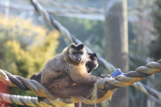 Brooklands Zoo: Monkey!