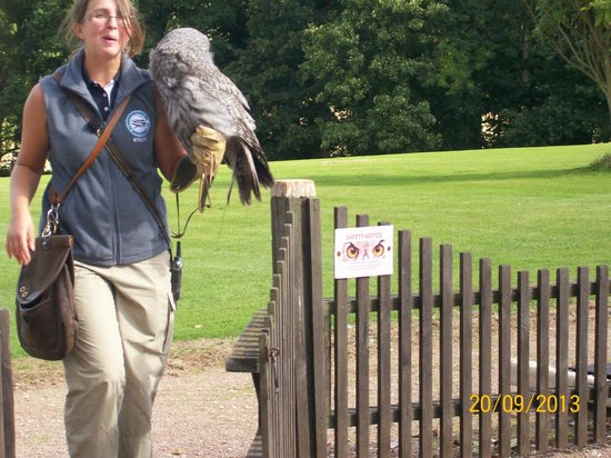 The International Centre for Birds of Prey : Great grey owl
