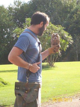 The International Centre for Birds of Prey : Long eared owl