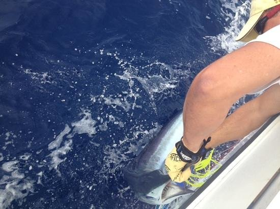 Fish On: White marlin