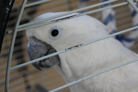 """Dive Inn Bed and Breakfast: The """"Hello!"""" Parrot :)"""