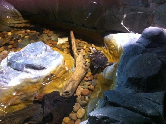 Lakes Aquarium: ...