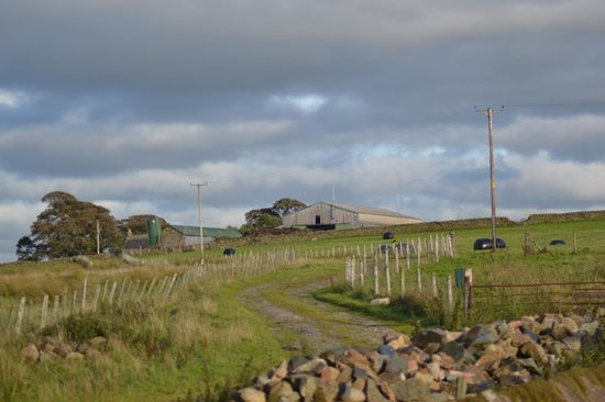Near Howe Cottages: scenes outside the cottage