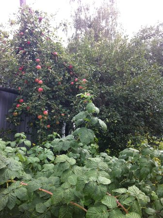 Na Sadovoy Guest House: the apples from their gardens were yumm