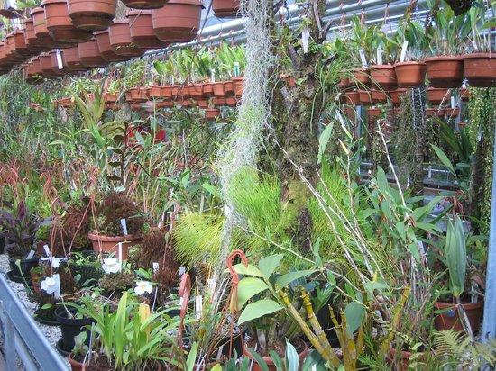 Botanical Gardens (Hortus Botanicus): Crowded Greenhouse
