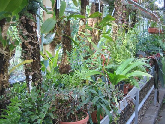 Botanical Gardens (Hortus Botanicus): In the Greenhouse