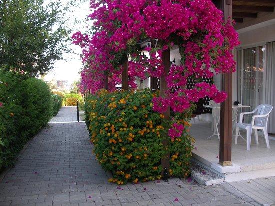 Citrus Tree Gardens : Floral delight!
