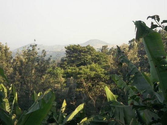 Guava Garden Lodge B&B: Arusha
