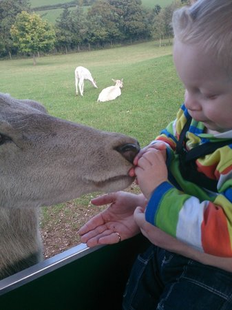 World of Country Life : My son feeding the deer